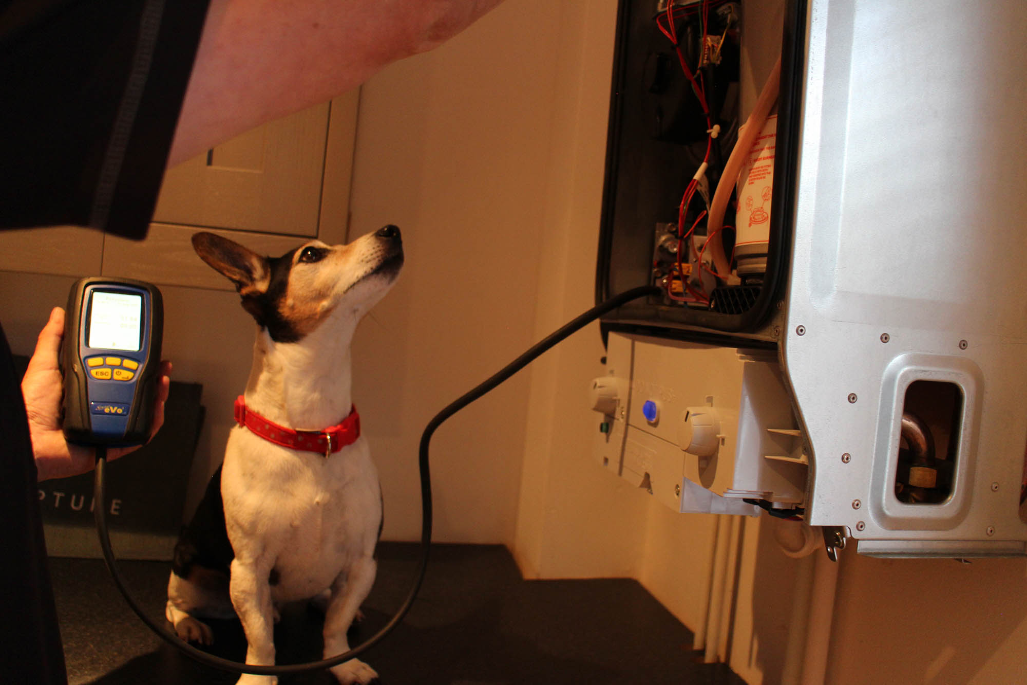 Power Plumbing in action, accompanied by Rory the Jack Russell
